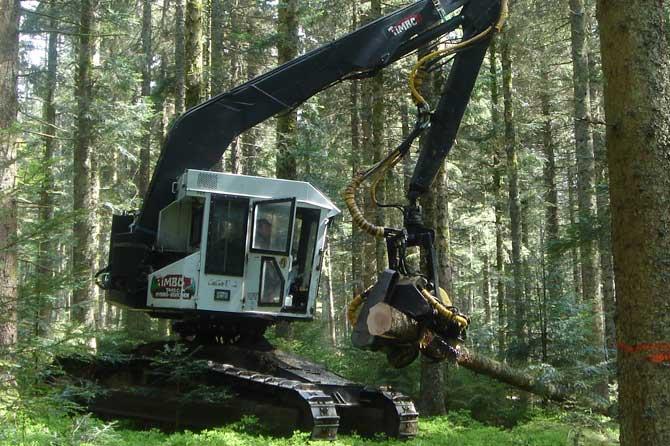 Fotografía de una Timbco de SARL MOREL con un cabezal procesador AFM Forest