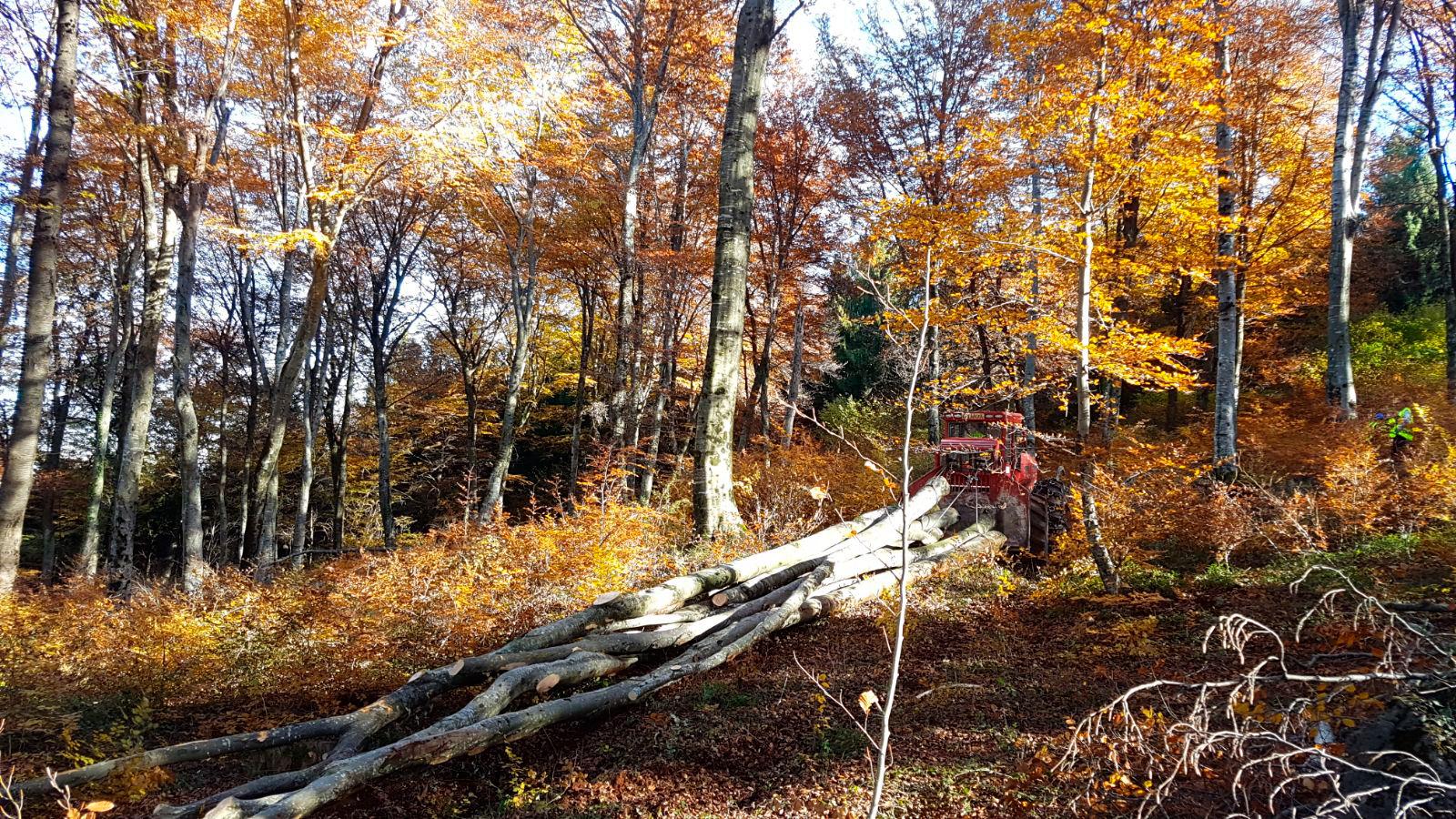 Demostración Forestal De Skidders Camox